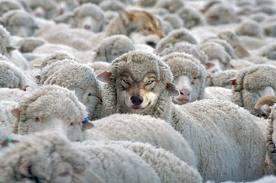 oveja y lobo