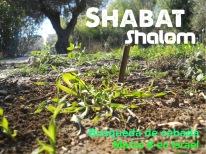 Shabat Shalom BuscandoLaCebada
