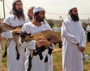 Esta es una fotografía del último ensayo del sacrificio de Pesaj en Israel.