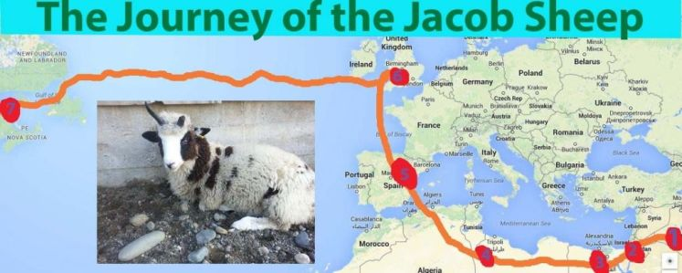sheep-journey-graphic