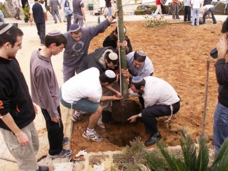 enlace-judio-mundo-judc3ado-celebra-mac3b1ana-te2809du-bishvat-fiesta-ecolc3b3gica-conocida-como-ac3b1o-nuevo-de-los-c381rboles