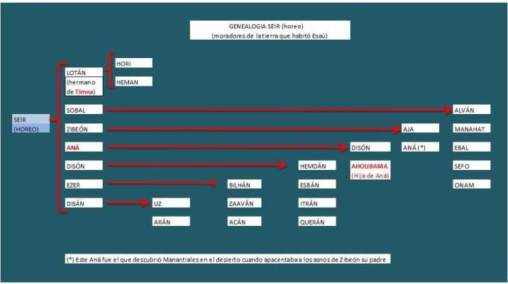 genealogia de SEIR horeo